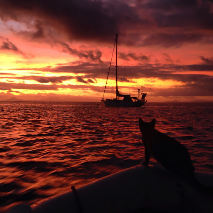sailing-cat-travelling-world 21