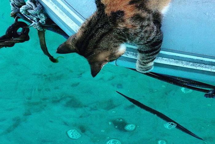sailing-cat-travelling-world 4