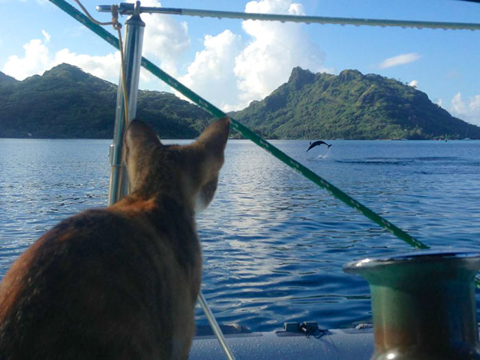 sailing-cat-travelling-world 7
