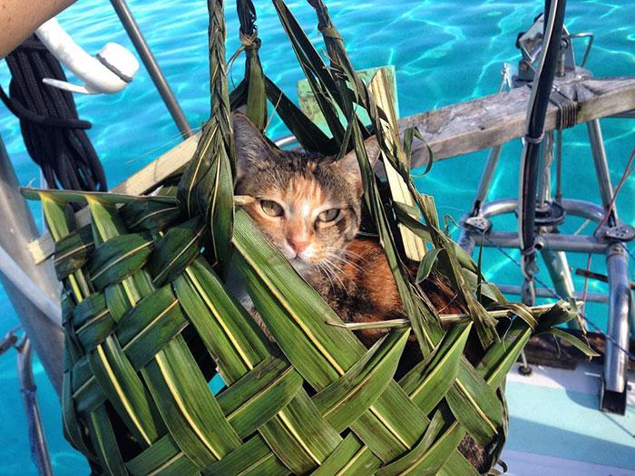 sailing-cat-travelling-world 8