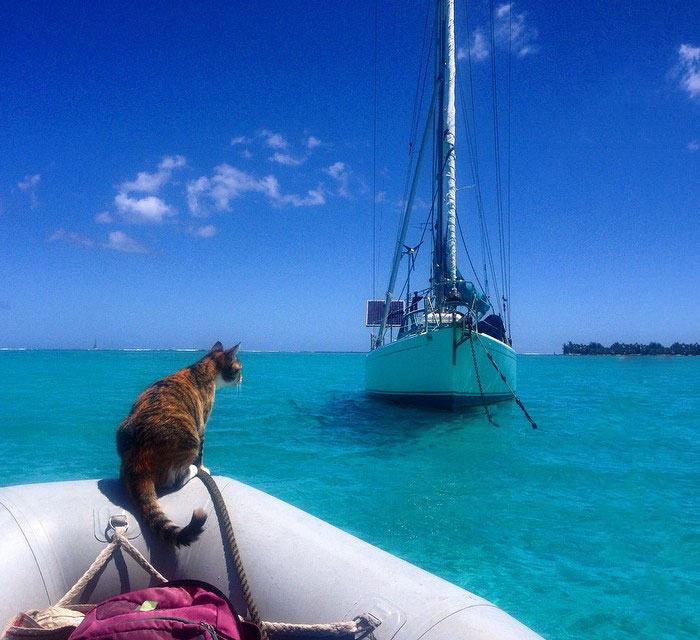 sailing-cat-travelling-world-liz-clark-1