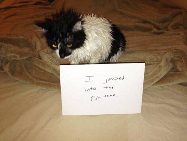 cats shaming 17