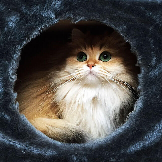 good looking cat 3