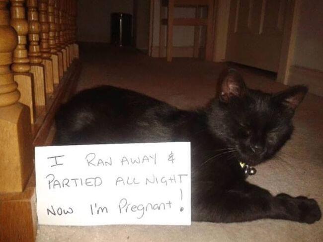 pet shaming 4