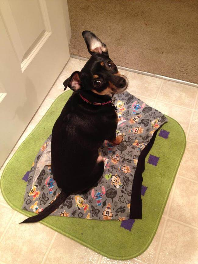 Dogs Sit With You While You Poop 6