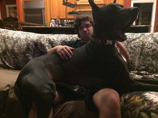 huge dogs of the world 22