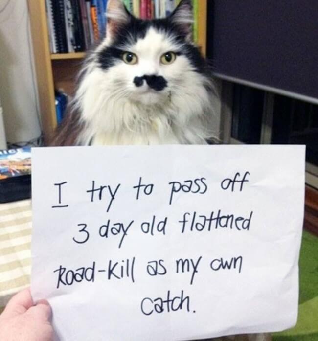 cat shame 22