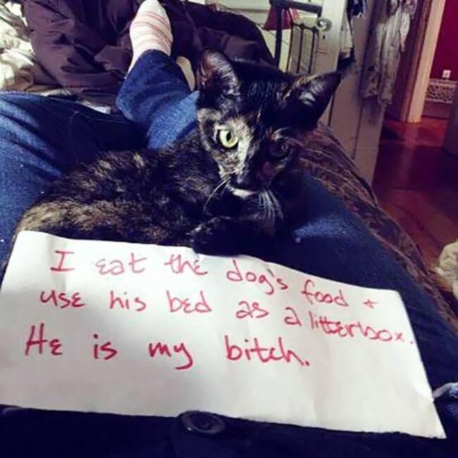 shaming cats 14