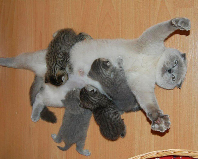 animals show what it's like being a mom 2