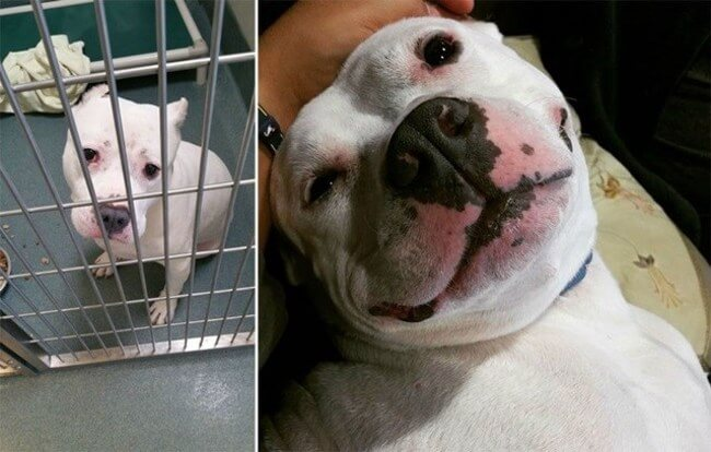 Before And After Adoption Images 1