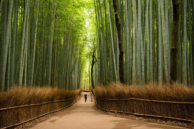 dreamy Places In Japan 2
