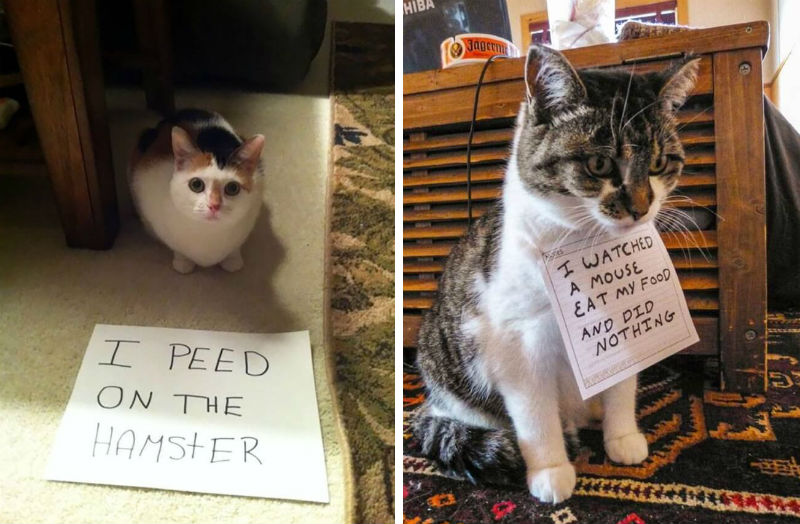 cat shaming feat