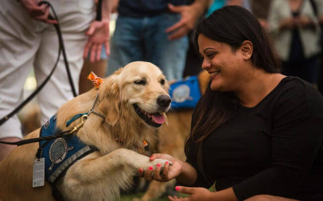 Dogs comfort Orlando shooting victims 2