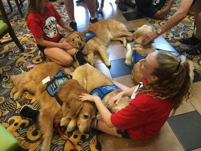 Dogs comfort Orlando shooting victims 4