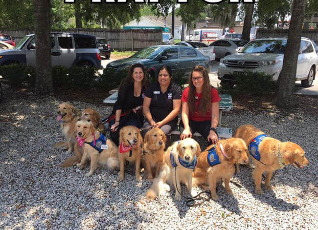 Dogs comfort Orlando shooting victims 6