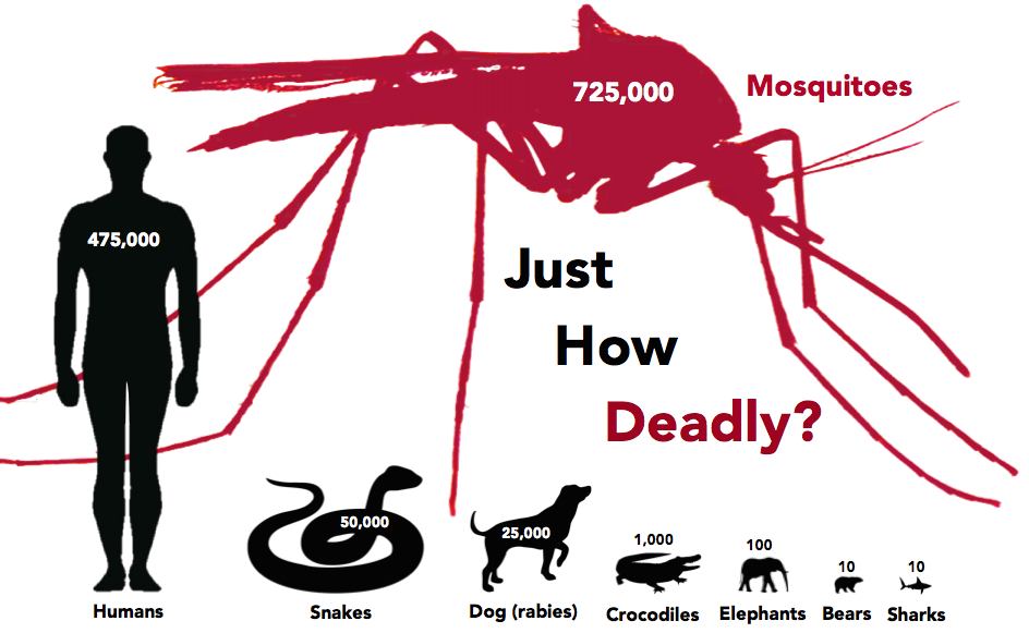 facts about mosquitoes - number of deaths