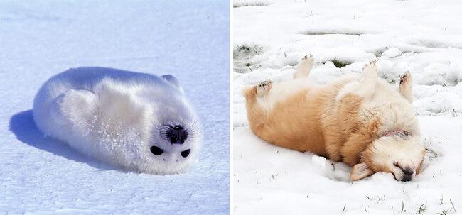 seals are like puppies 1