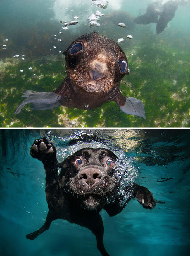 seals are like puppies 2