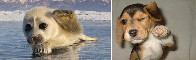 seals are like puppies 12