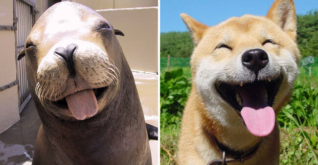 seals are like puppies 4