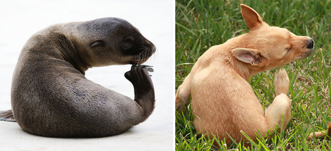 seals are like puppies 13