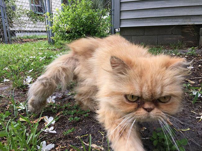 Homeless Grumpy Cat 5