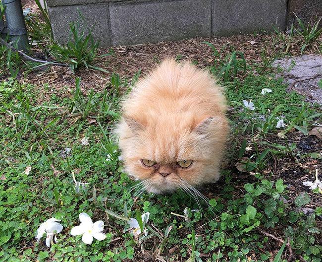 Homeless Grumpy Cat 2