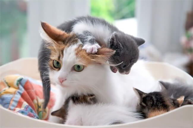 animals show what it's like being a mom 4