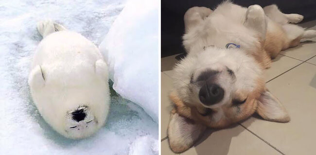 15 Adorable Images That Prove Seals Are Just Sea Puppies