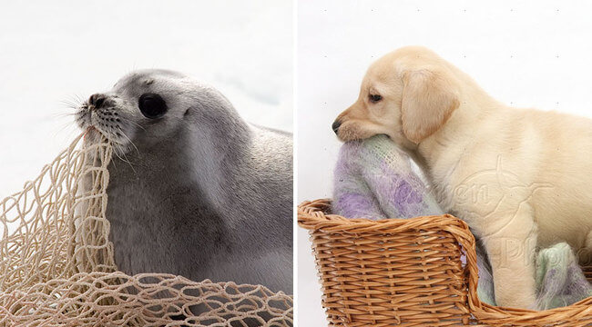 seals are like puppies 10