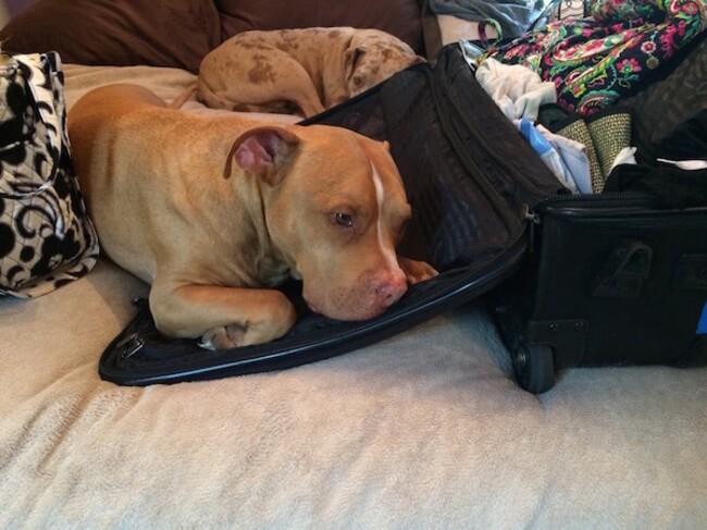 animal guilt trip faces 4
