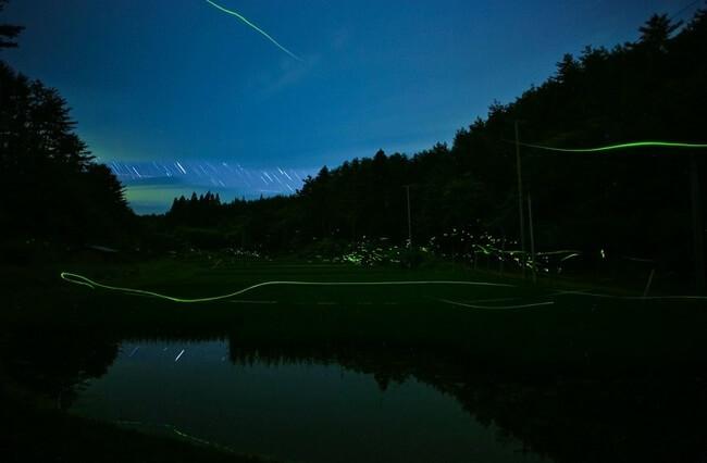 japan fireflies photos 4