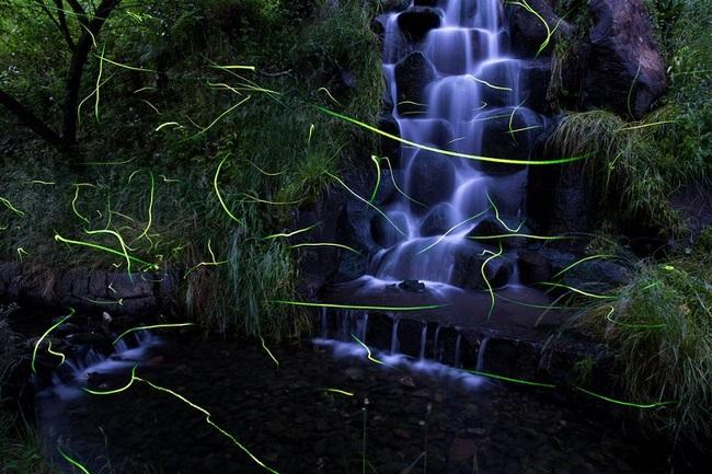 japan fireflies photos 5