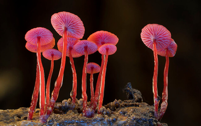 unusual mushrooms 14