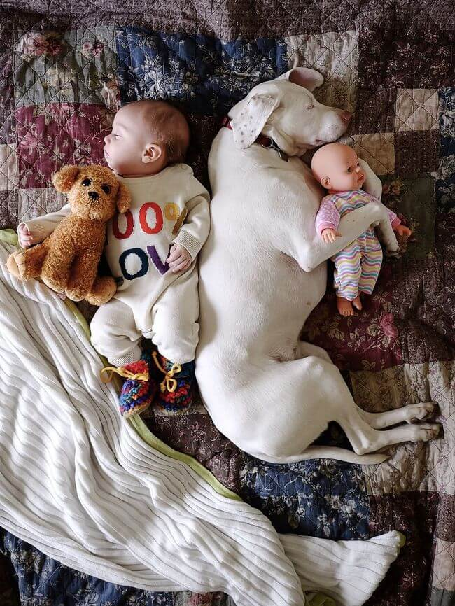 dog and baby nap time 4