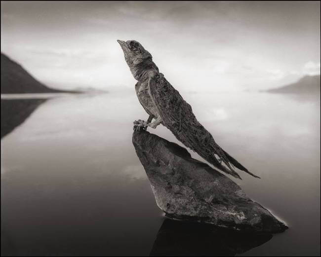 lake natron 5
