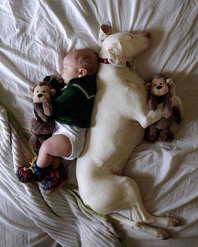 Mom Captures Special Moments Between Rescue Dog And Newborn 16