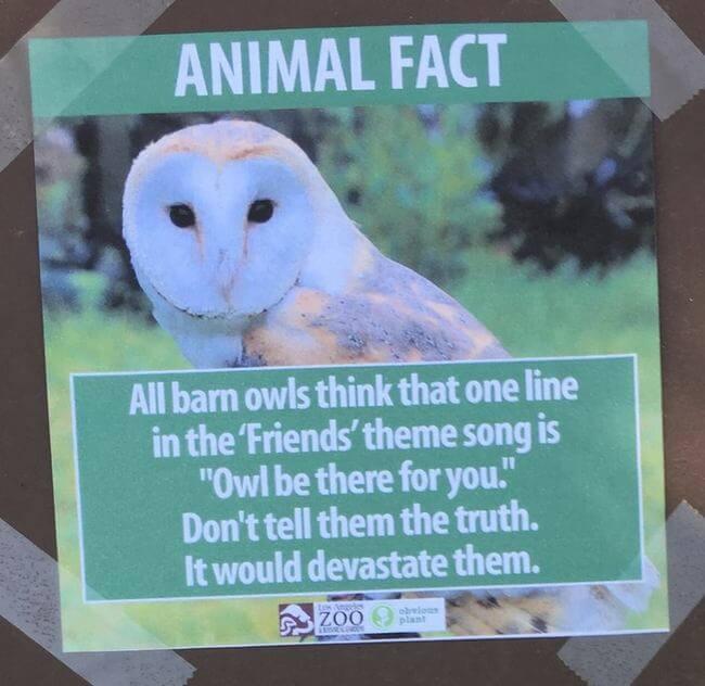 fake animal signs 4