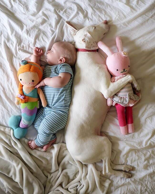 dog and baby nap time 6