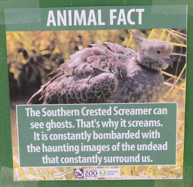 fake animal signs 1