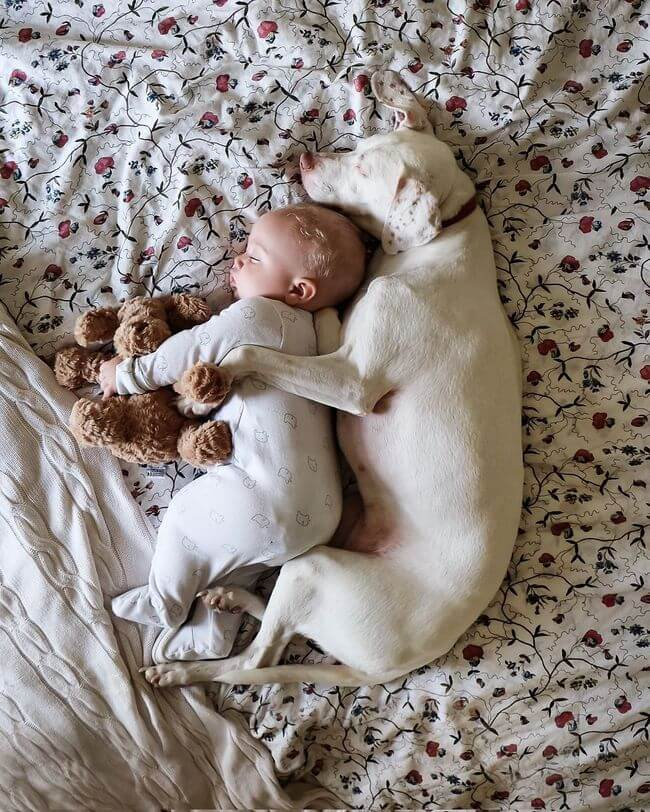 dog and baby nap time 3