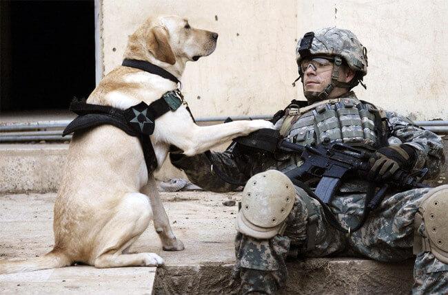 amazing dog photos 4
