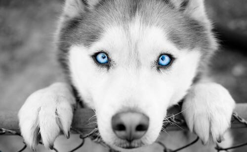 amazing dog photos 14 (1)