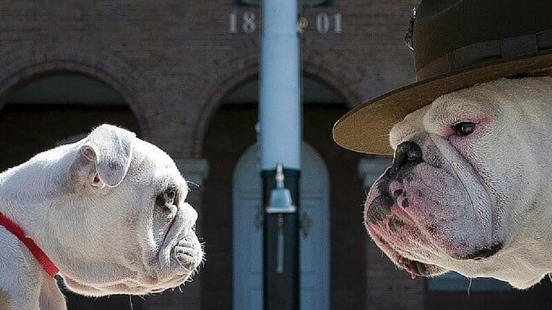 amazing dog photos feat (1) (1)
