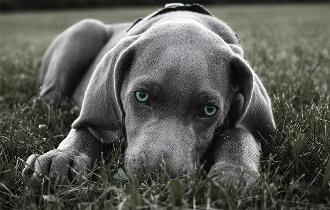 amazing dog photos 3