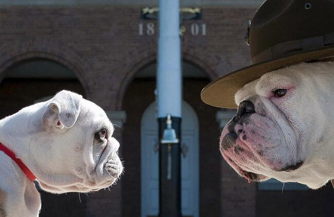 amazing dog photos 11
