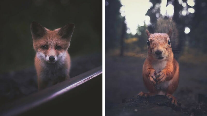 close pictures of animals (1)