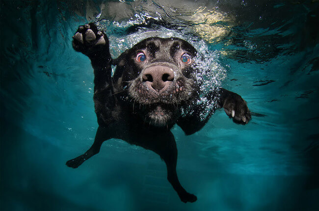amazing dog photographs 6