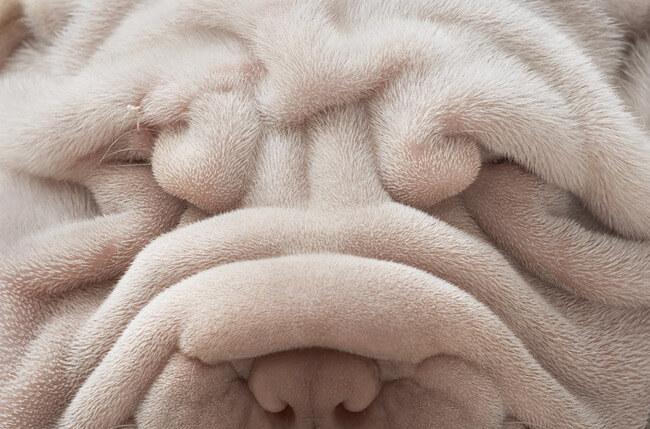 amazing dog photos 2