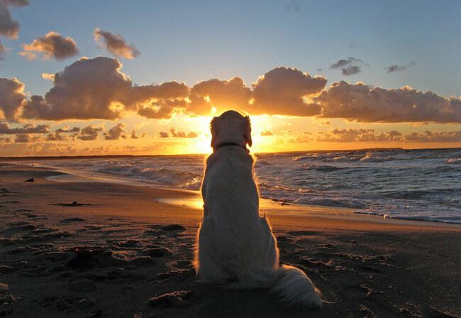 amazing dog photos 12